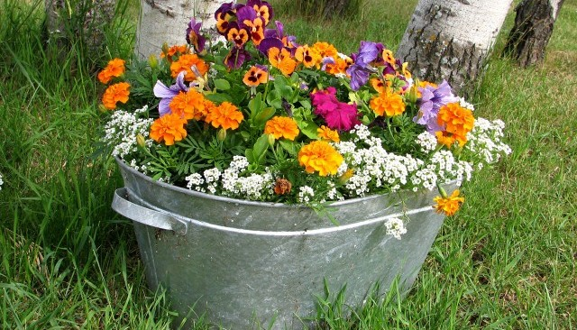 Metal tub with flowers